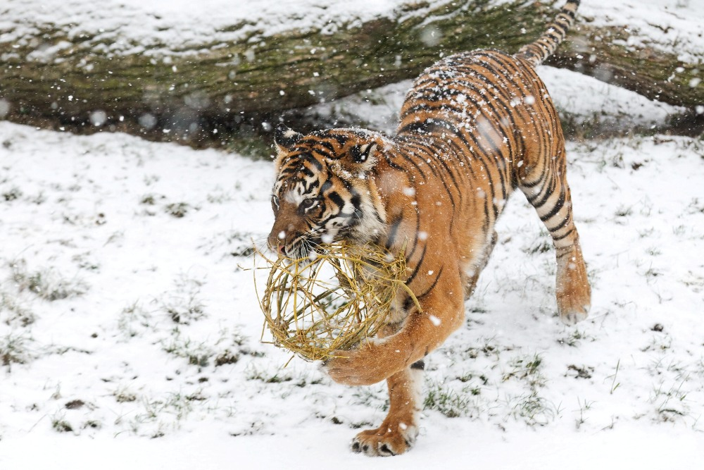 This is how Christmas looks in the Prague Zoo (photo source: zoopraha.cz)