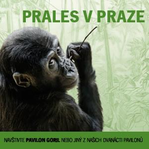 Prales v Praze
