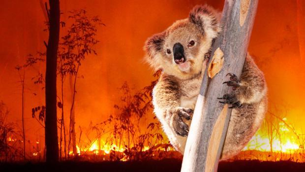 """Na australskou faunu ohroženou požáry můžete nyní přispět i prostřednictvím veřejné sbírky Zoo Praha """"Pomáháme jim přežít""""."""