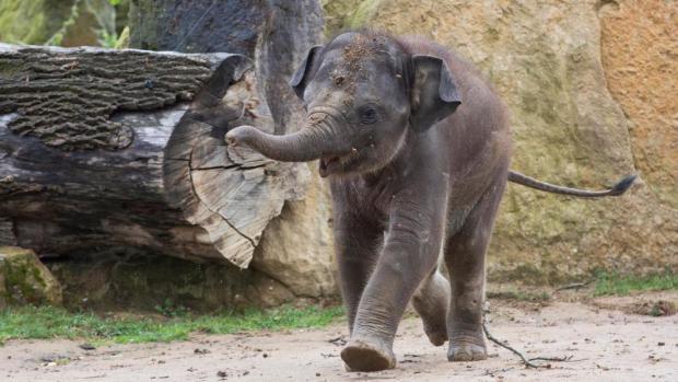 День рождения слонёнка