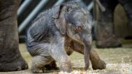 The female elephant as pictured this Wednesday. Photo by Petr Hamerník, Prague Zoo