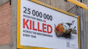 BirdLife International estimates that 25 million migratory birds are illegally killed each year in the Mediterranean. The Union of Czech and Slovak Zoological Gardens (UCSZOO) has decided to draw attention to this alarming situation with an outdoor campaign. Photo: Petr Hamerník, Prague Zoo
