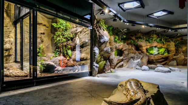 The Giant Salamander´s Pavilion, photo: Tomáš Adamec, Prague Zoo