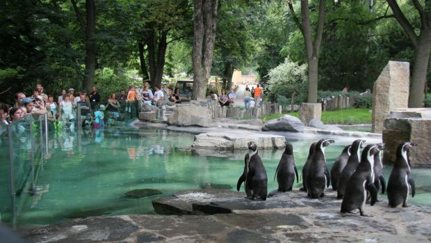 Outside of Pavilion of Penguins, photo: Prague Zoo´s Archive