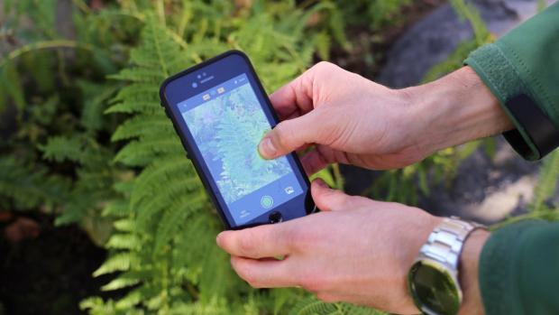 Pro každého, koho zajímá příroda, představuje aplikace iNaturalist jedinečnou a neocenitelnou pomoc. Zdroj: storybench.org