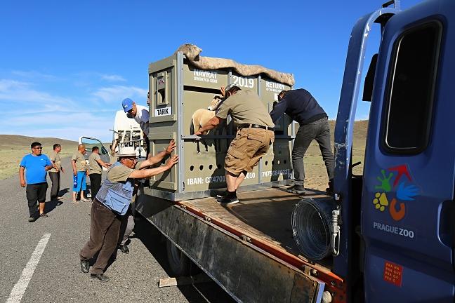 Potížím nebyl konec ani v Mongolsku. Cestou do Tachin talu se porouchal jeden z náklaďáků, takže jsme Tarik a Taru překládali na náhradní.