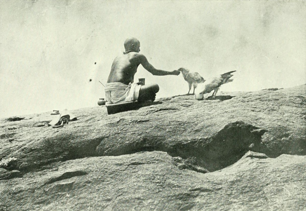 The photo, by ethnographer Edgar Thurston, is the first to show the sacred vultures in the temple in Tirukalukundram. It was published in his book in 1906.