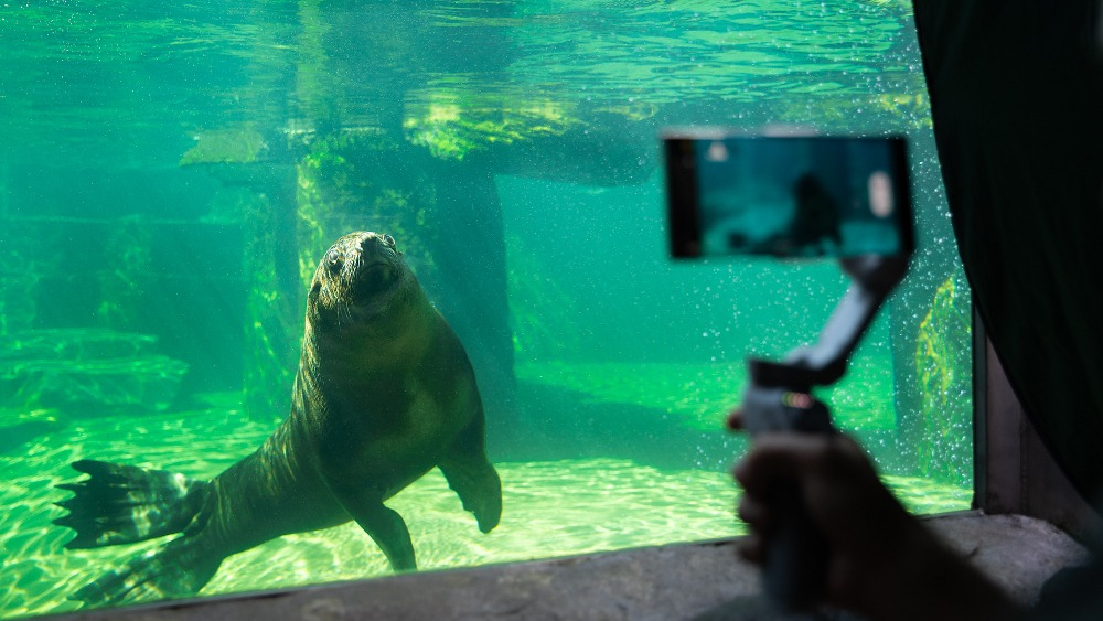 All filming took place exclusively from publicly available places, these are shots that you can also take at the Prague Zoo. Photo: Samsung Electronics Czech and Slovak