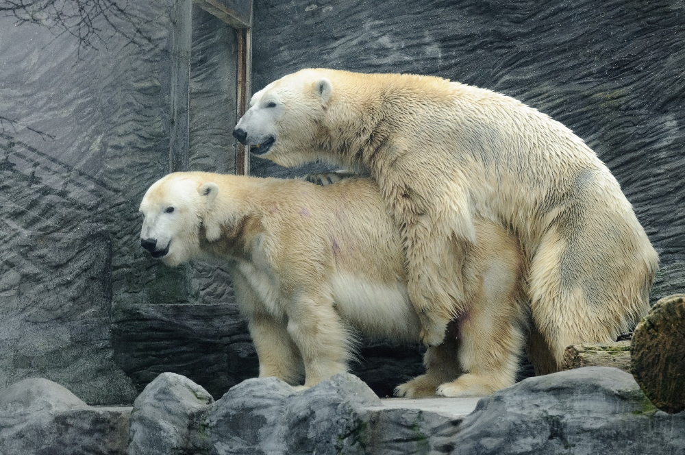 The audience was also really taken by the video from the polar bear enclosure. Photo: Roman Vodička, Prague Zoo