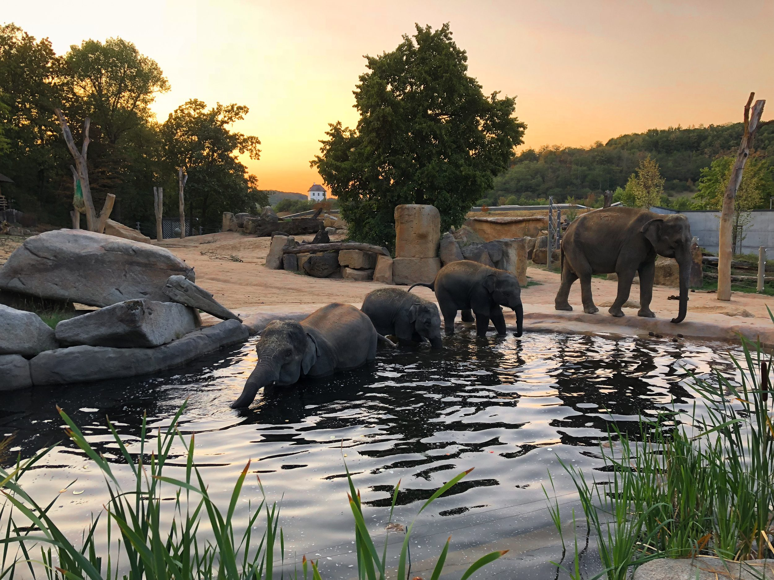 Prague Zoo: photos, address, opening hours and reviews of tourists 77