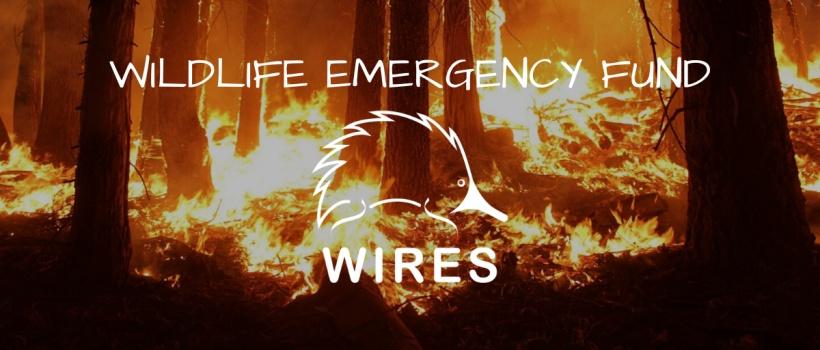 Organizace WIRES pomáhá volně žijícím živočichům v Austrálii už 35 let. Foto: WIRES