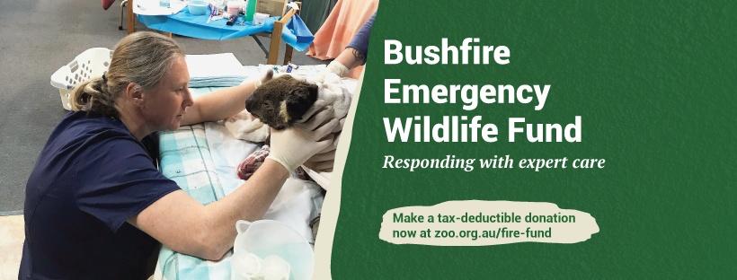 Peníze zaslané na Bushfire Emergency Wildlife Fund financují mimo jiné urgentní veterinární péči. Foto: Zoos Victoria