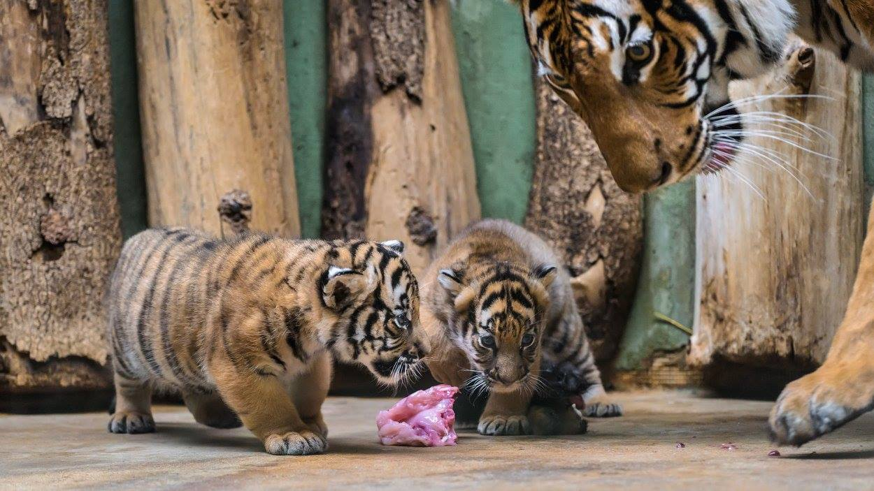 Prague Zoo: photos, address, opening hours and reviews of tourists 22