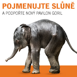 Pojmenuj slůně a podpoř nový pavilon goril