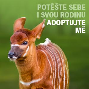 Adopční kampaň - bongo horský