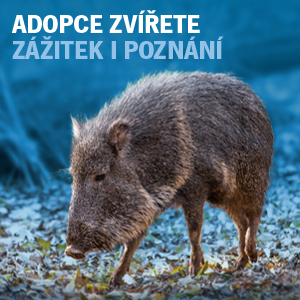 Adopční kampaň - pekari Wágnerův
