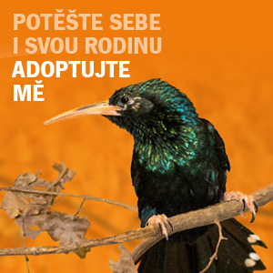 Adopční kampaň 2016