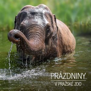 Prázdniny v pražské zoo