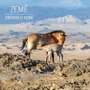 Výstava Země divokých koní v Czech Photo Centre