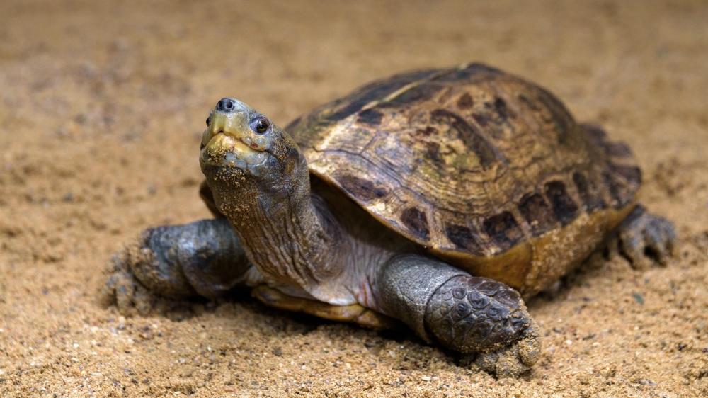 Výsledek obrázku pro želva obrazky
