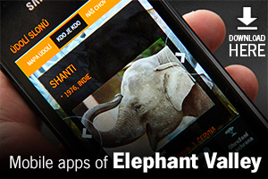Mobile application - the Elephant Valley